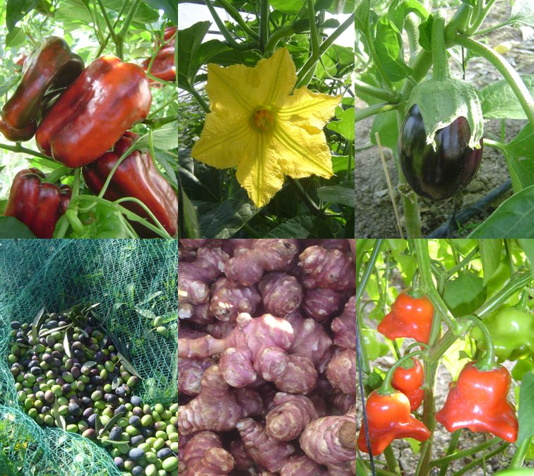 Productions locales - Agriculture Biologique - Légumes & Fruits AB - Méditerranée - Nice