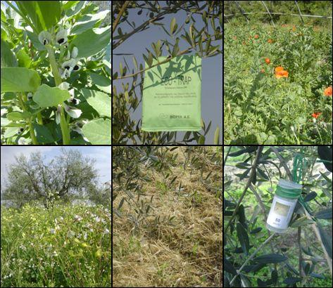 Ncig xyuas Nplog teb - Page 2 Lutte-biologique-engrais-vert-compost-agriculture-biologique-legumes-olives-de-nice-produits-de-la-ferme